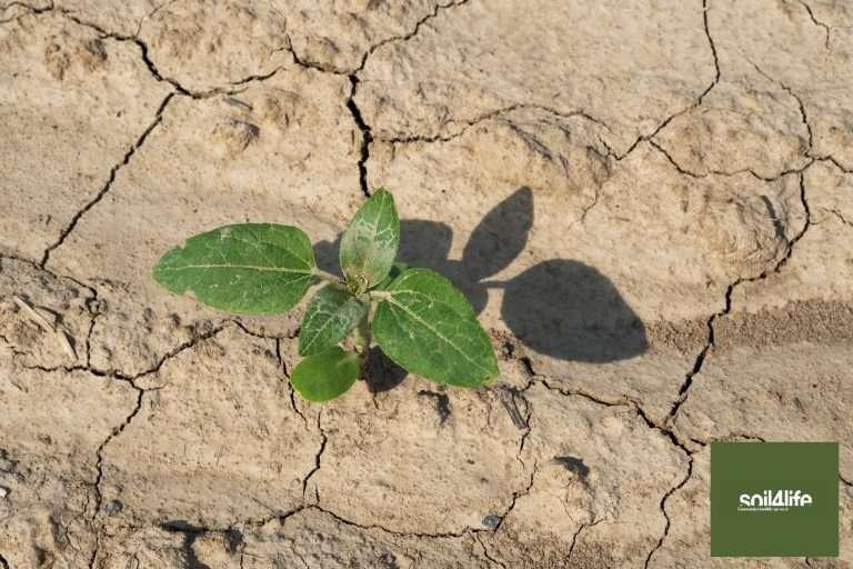 Il progetto Soil4Life presenta le Linee Guida per l'uso sostenibile del suolo per i professionisti dell'area tecnica